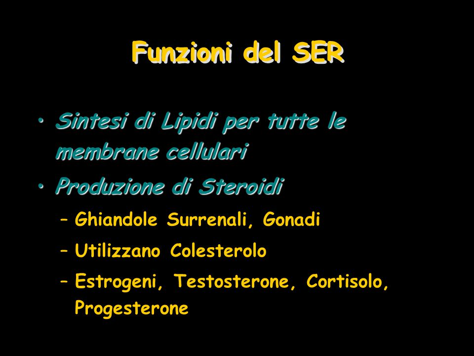 Sintesi di Lipidi per tutte le membrane cellulariSintesi di Lipidi per tutte le membrane cellulari Produzione di SteroidiProduzione di Steroidi –Ghian