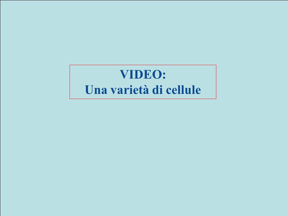 VIDEO: Una varietà di cellule