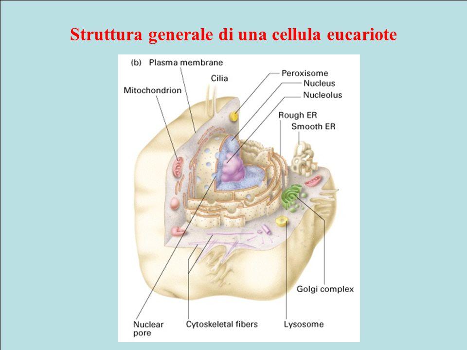 Struttura generale di una cellula eucariote