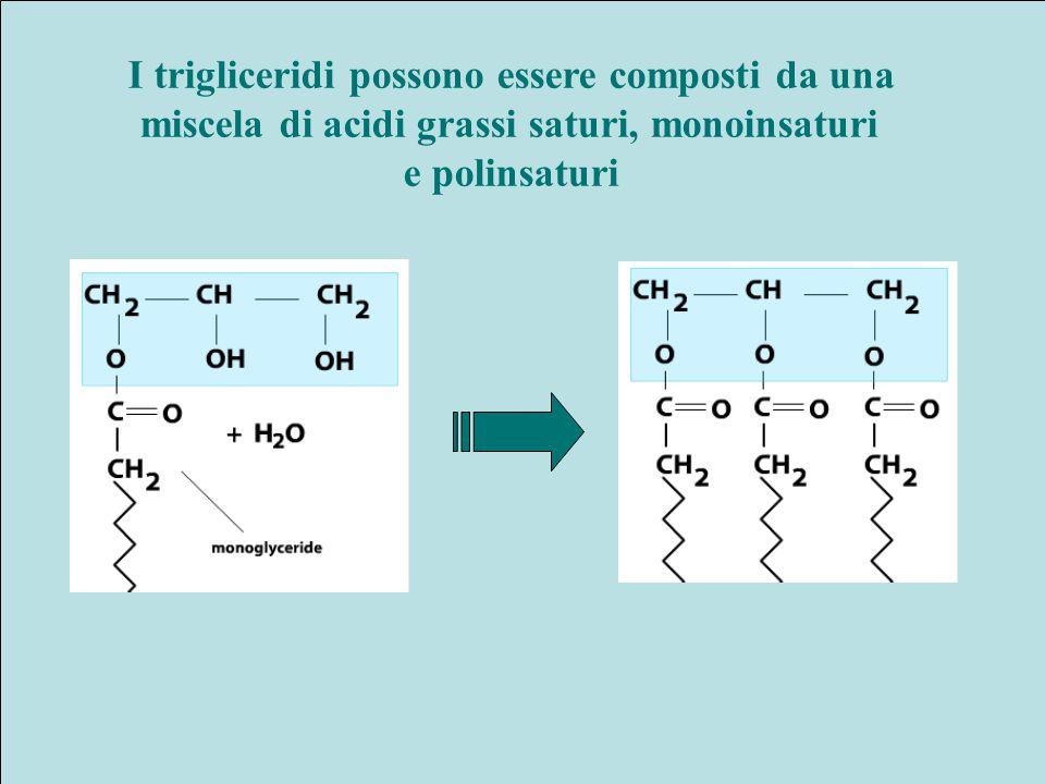 I trigliceridi possono essere composti da una miscela di acidi grassi saturi, monoinsaturi e polinsaturi