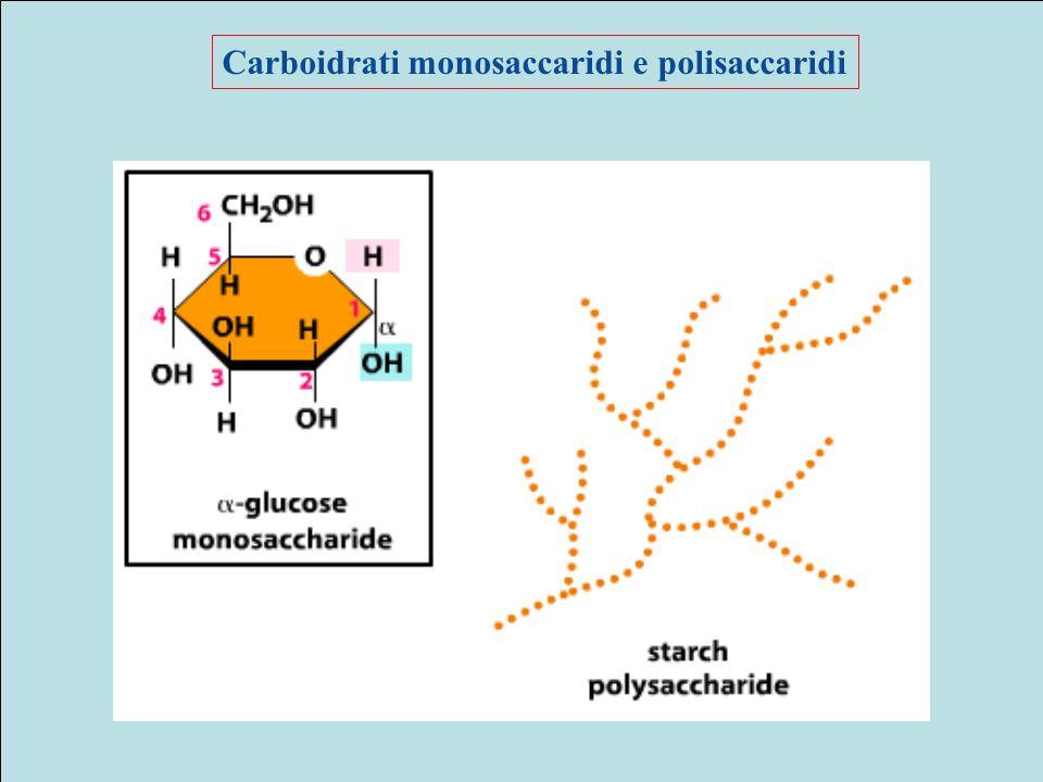 Carboidrati monosaccaridi e polisaccaridi
