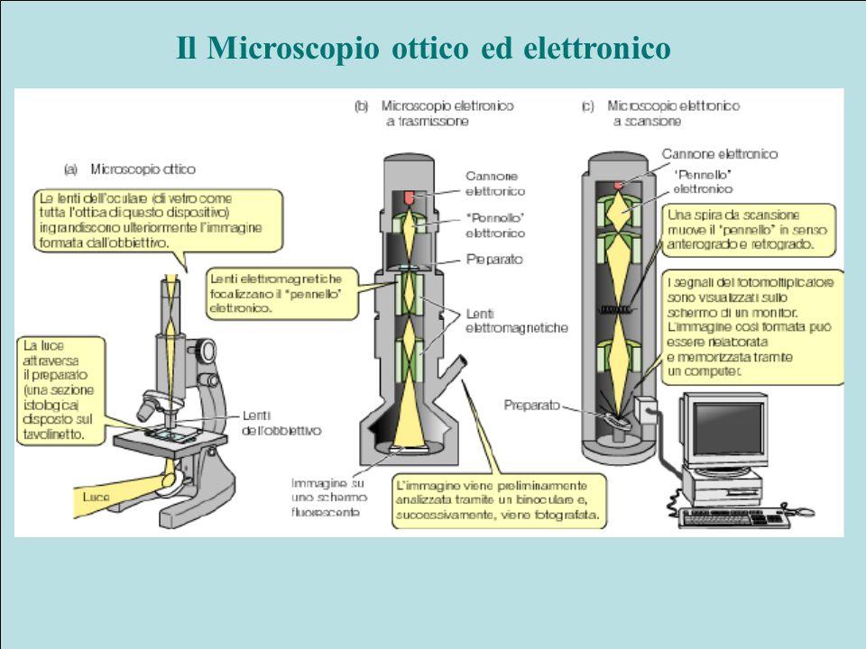 Il Microscopio ottico ed elettronico
