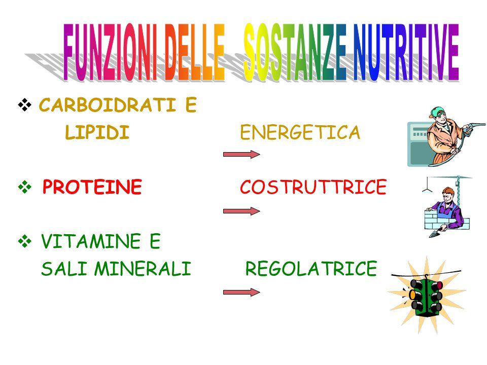 FUNZIONE ENERGETICA ALIMENTI ENERGETICI 1.Gruppo: cereali, derivatiCARBOIDRATI patate, zucchero, miele 2.