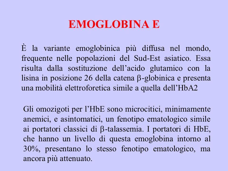 EMOGLOBINA E È la variante emoglobinica più diffusa nel mondo, frequente nelle popolazioni del Sud-Est asiatico. Essa risulta dalla sostituzione dell'