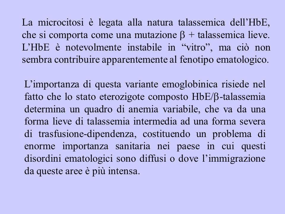 La microcitosi è legata alla natura talassemica dell'HbE, che si comporta come una mutazione  + talassemica lieve. L'HbE è notevolmente instabile in