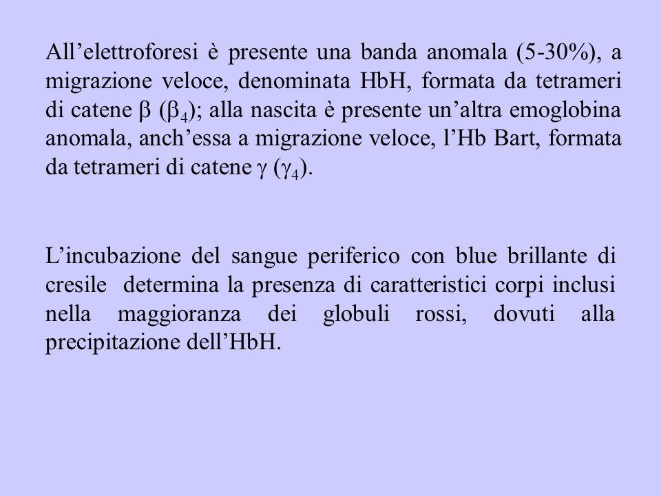 All'elettroforesi è presente una banda anomala (5-30%), a migrazione veloce, denominata HbH, formata da tetrameri di catene  (  4 ); alla nascita è
