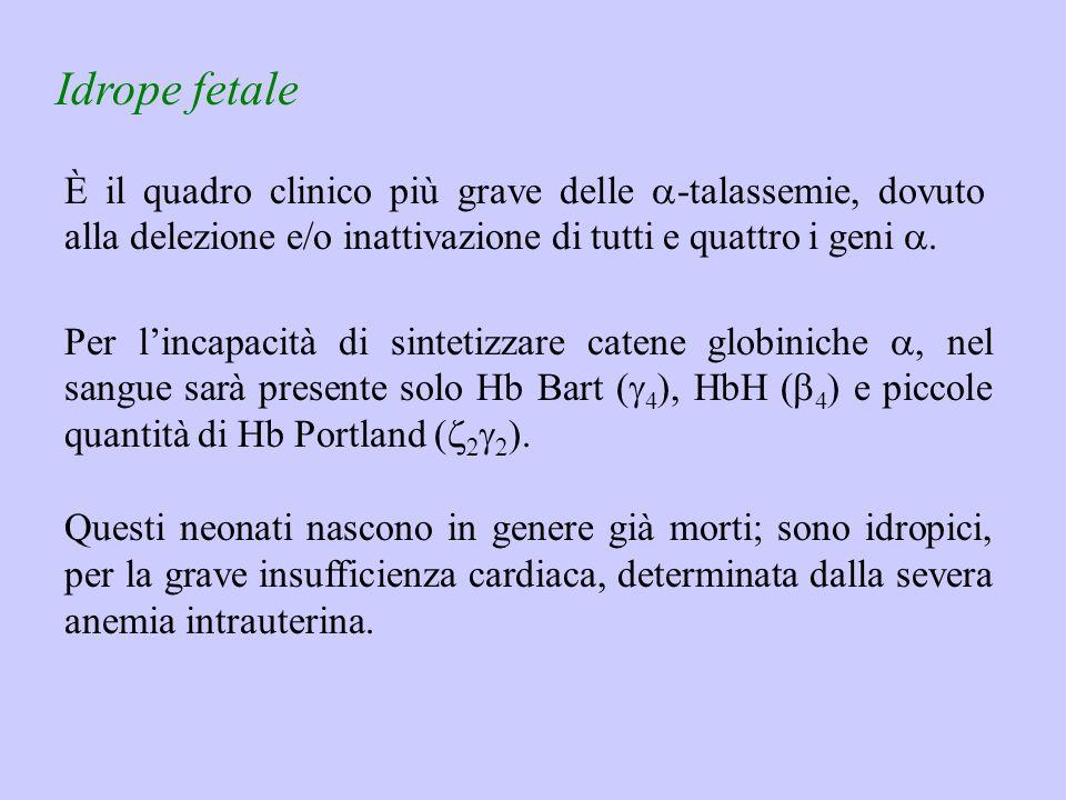 Idrope fetale È il quadro clinico più grave delle  -talassemie, dovuto alla delezione e/o inattivazione di tutti e quattro i geni . Questi neonati n
