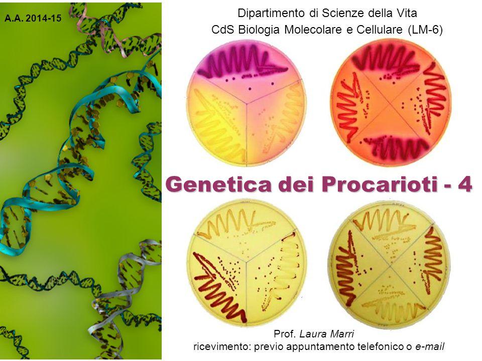 Frequenza di mutazione La frequenza con cui avvengono i diversi tipi di mutazioni è estremamente variabile.