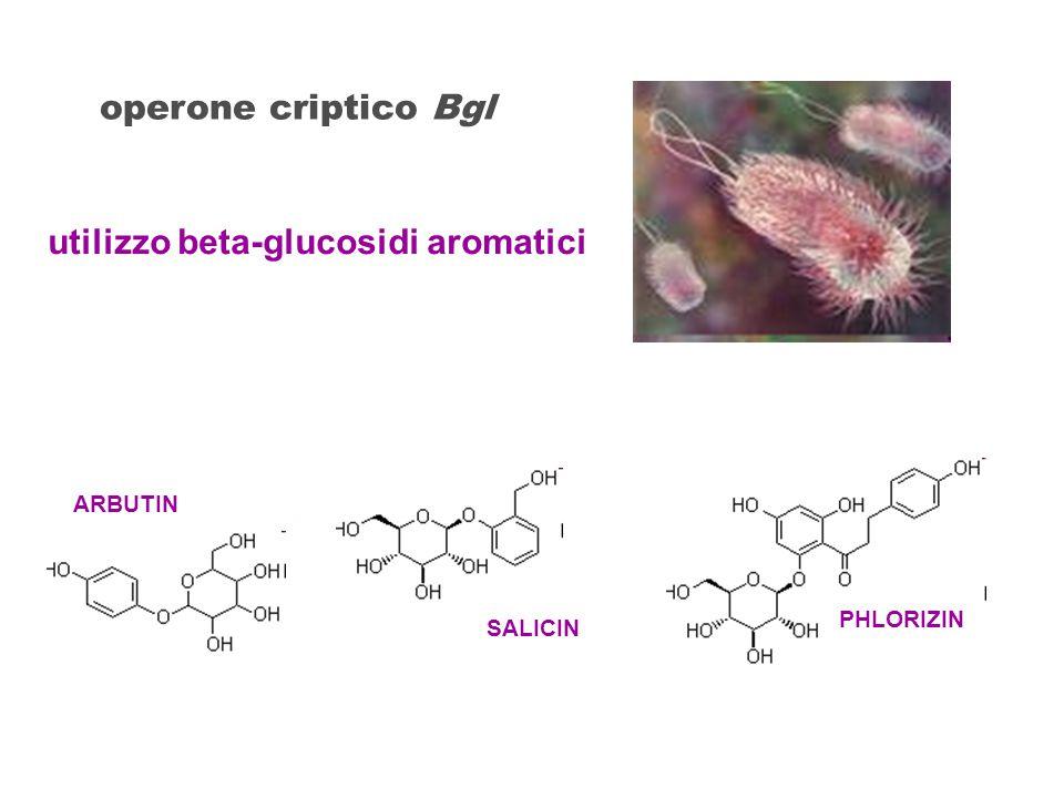 ARBUTIN SALICIN PHLORIZIN utilizzo beta-glucosidi aromatici operone criptico Bgl
