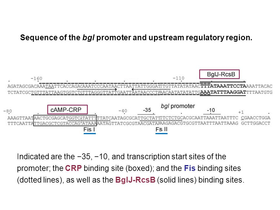 Sequence of the bgl promoter and upstream regulatory region. Indicated are the −35, −10, and transcription start sites of the promoter; the CRP bindin