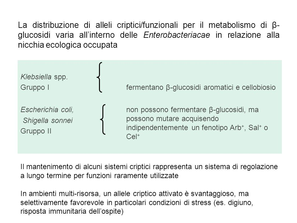 La distribuzione di alleli criptici/funzionali per il metabolismo di β- glucosidi varia all'interno delle Enterobacteriacae in relazione alla nicchia ecologica occupata Klebsiella spp.
