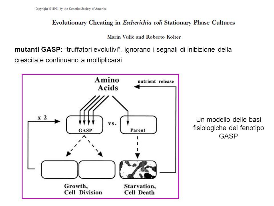 La competizione osservata all'interno di popolazioni batteriche è stata interpretata facendo riferimento alla teoria dei giochi i cooperatori (WT-WT) coesistono, entrambi bloccano anticipatamente la crescita e sono premiati attraverso la redistribuzione delle risorse necessarie al mantenimento della popolazione per lungo tempo i cooperatori (WT) che incontrano i truffatori (GASP) sono imbrogliati e le loro risorse vengono consumate prematuramente dai secondi i truffatori che coesistono tra loro (GASP & GASP) sono puniti poichè continuano a crescere senza controllo mettendo a rischio la vitalità a lungo termine