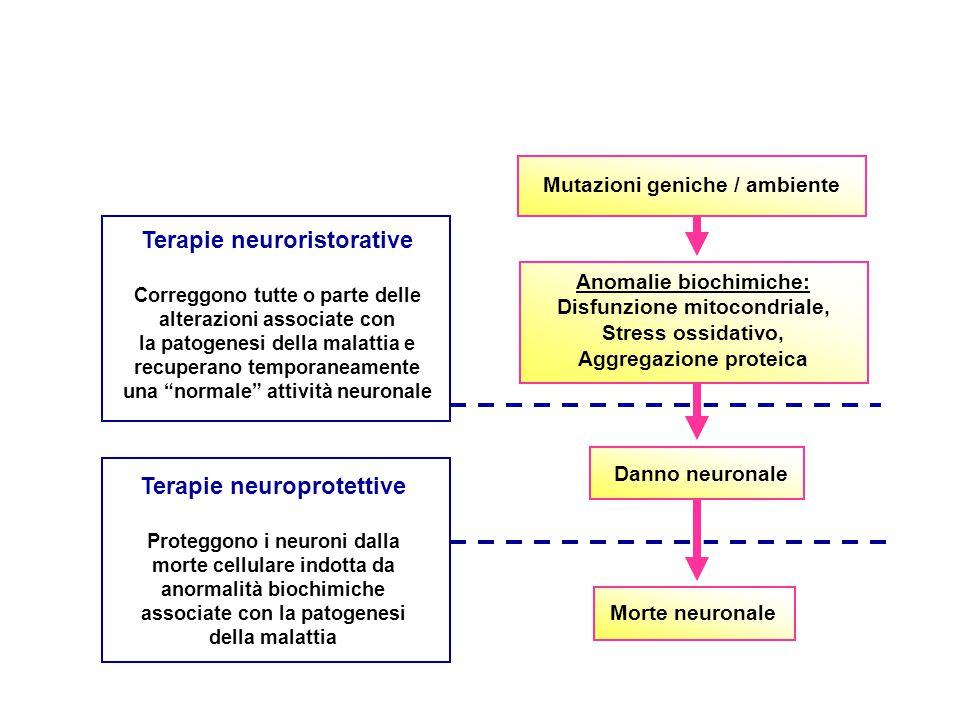 Mutazioni geniche / ambiente Anomalie biochimiche: Disfunzione mitocondriale, Stress ossidativo, Aggregazione proteica Danno neuronale Morte neuronale Terapie neuroprotettive Proteggono i neuroni dalla morte cellulare indotta da anormalità biochimiche associate con la patogenesi della malattia Terapie neuroristorative Correggono tutte o parte delle alterazioni associate con la patogenesi della malattia e recuperano temporaneamente una normale attività neuronale