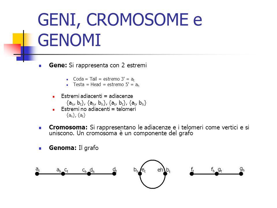 GENI, CROMOSOME e GENOMI Gene: Si rappresenta con 2 estremi Coda = Tail = estremo 3 = a t Testa = Head = estremo 5 = a h Estremi adiacenti = adiacenze {a h, b t }, {a h, b h }, {a t, b t }, {a t, b h } Estremi no adiacenti = telomeri {a h }, {a t } Cromosoma: Si rappresentano le adiacenze e i telomeri come vertici e si uniscono.