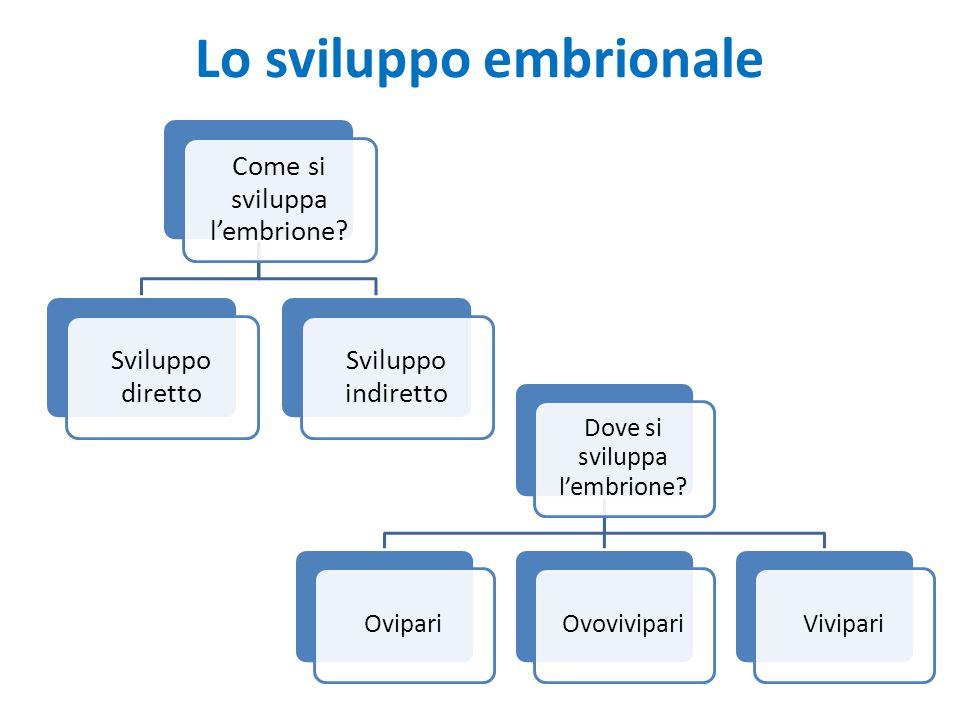 Lo sviluppo embrionale Come si sviluppa l'embrione? Sviluppo diretto Sviluppo indiretto Dove si sviluppa l'embrione? OvipariOvovivipariVivipari