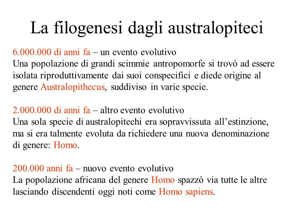 La filogenesi dagli australopiteci 6.000.000 di anni fa – un evento evolutivo Una popolazione di grandi scimmie antropomorfe si trovò ad essere isolata riproduttivamente dai suoi conspecifici e diede origine al genere Australopithecus, suddiviso in varie specie.