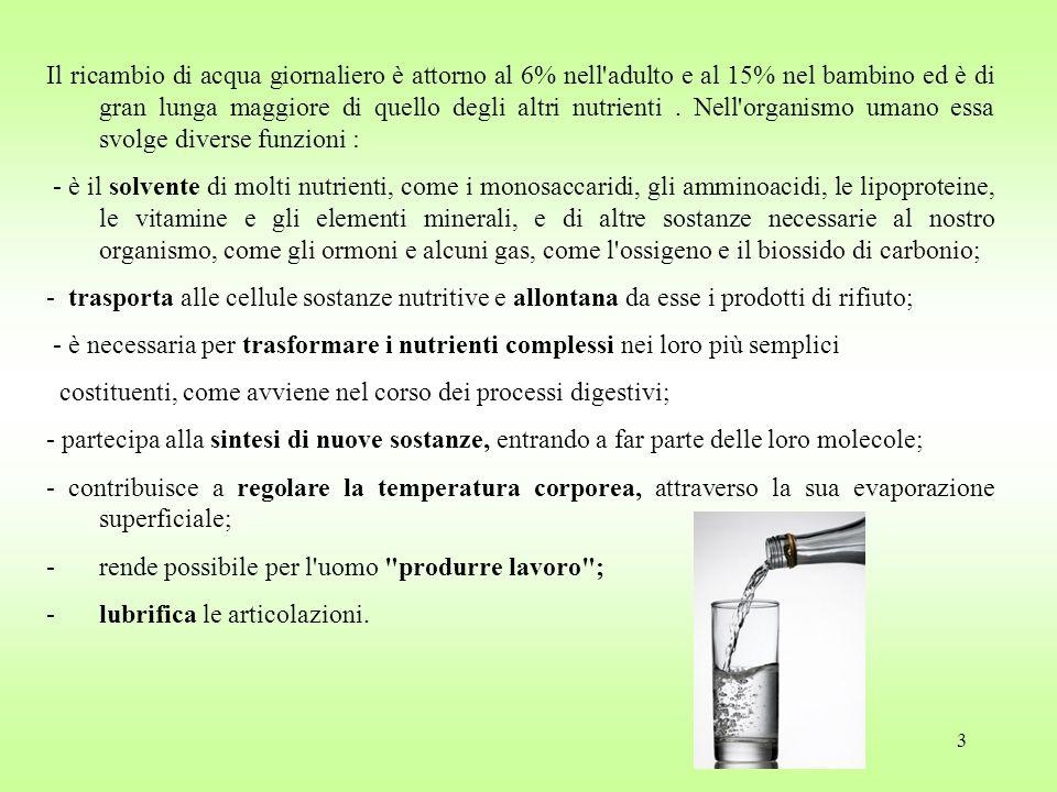 3 Il ricambio di acqua giornaliero è attorno al 6% nell adulto e al 15% nel bambino ed è di gran lunga maggiore di quello degli altri nutrienti.