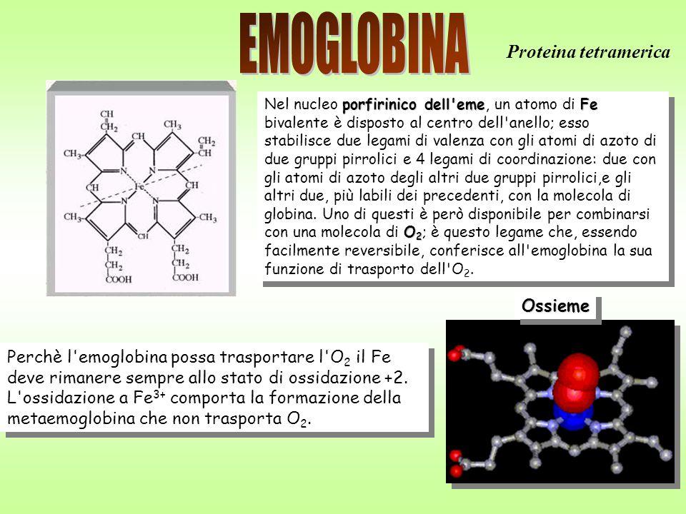 36 Perchè l emoglobina possa trasportare l O 2 il Fe deve rimanere sempre allo stato di ossidazione +2.