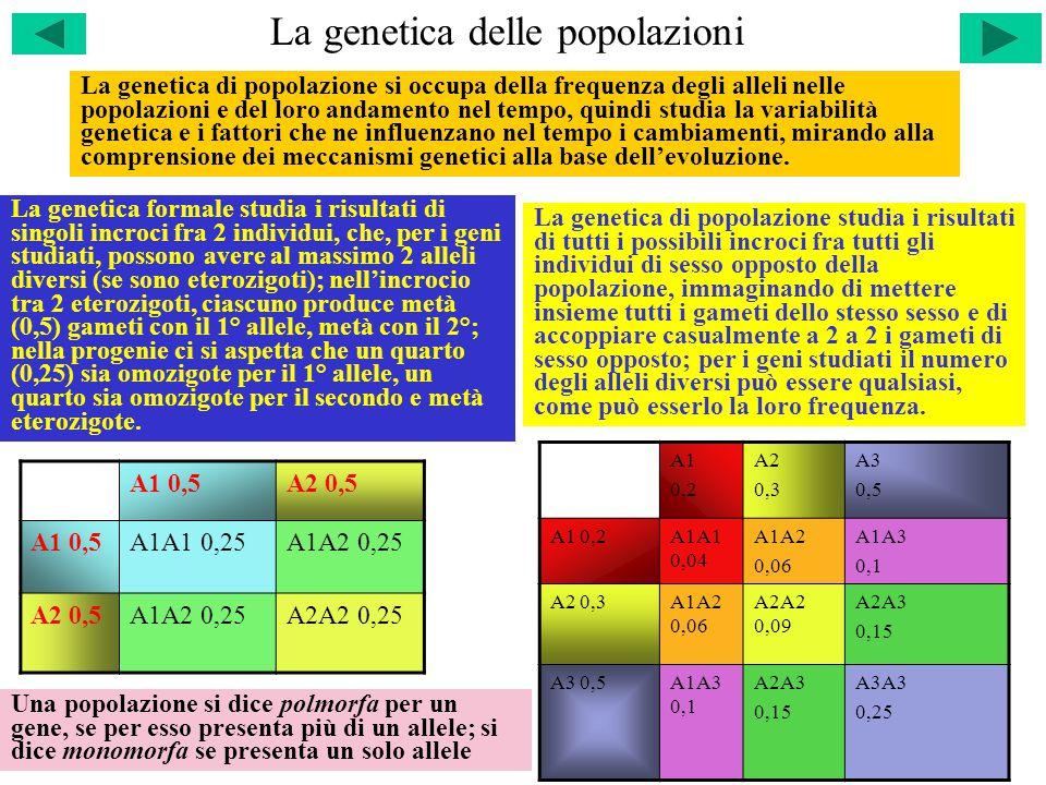 La genetica delle popolazioni La genetica di popolazione si occupa della frequenza degli alleli nelle popolazioni e del loro andamento nel tempo, quindi studia la variabilità genetica e i fattori che ne influenzano nel tempo i cambiamenti, mirando alla comprensione dei meccanismi genetici alla base dell'evoluzione.