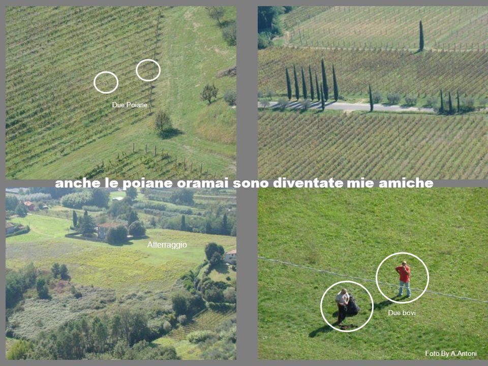 Atterraggio Foto By A.Antoni Due Poiane anche le poiane oramai sono diventate mie amiche Due bovi
