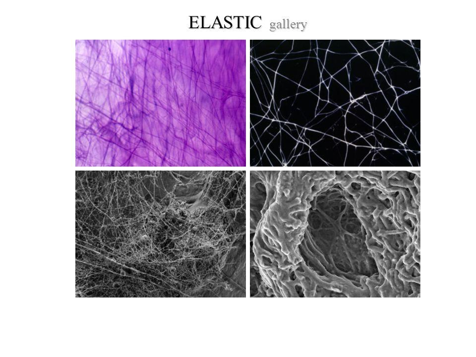 ELASTIC gallery