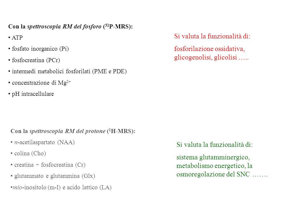 Con la spettroscopia RM del fosforo ( 31 P-MRS): ATP fosfato inorganico (Pi) fosfocreatina (PCr) intermedi metabolici fosforilati (PME e PDE) concentr
