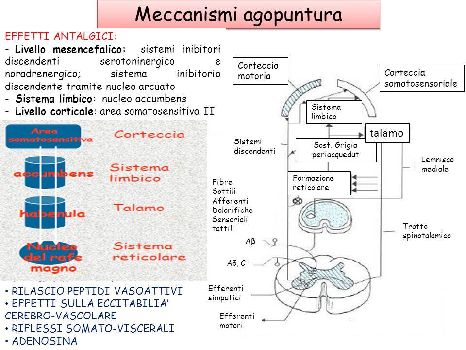 Meccanismi agopuntura Stimoloalgico Corteccia cerebrale nocicettore FibraMotriceEfferente Fibra nervosa afferente nervosa afferente Corno posteriore C