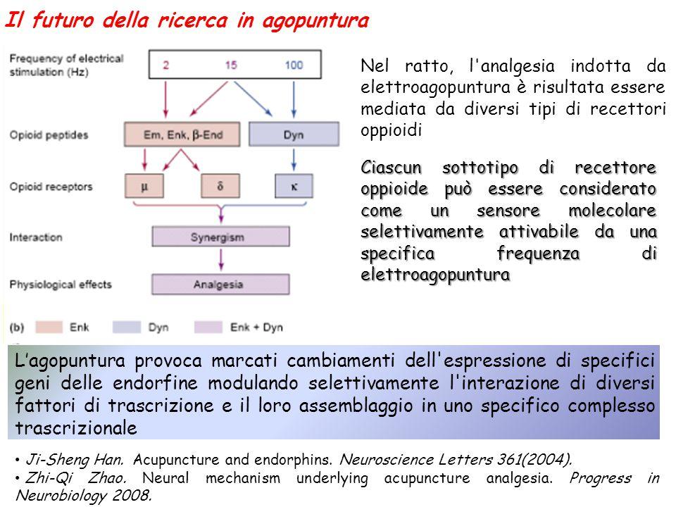 Il futuro della ricerca in agopuntura Nel ratto, l'analgesia indotta da elettroagopuntura è risultata essere mediata da diversi tipi di recettori oppi