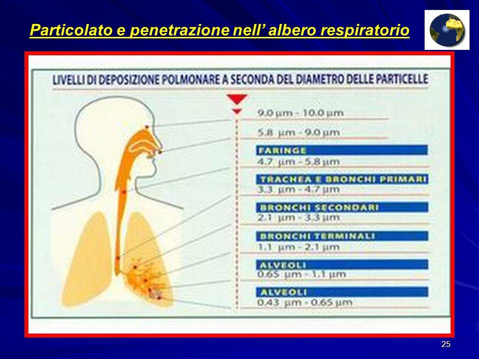 24 SO2 (biossido di zolfo) (Combustione in impianti fissi con utilizzo di olio, cherosene ecc) Polveri sottili (Auto diesel, usura freni e gomme) Benzene ed altri idrocarburi (auto a benzina, stazioni di rifornimento) NO2 (biossido di azoto) (auto, caldaie, centrali termiche) Monossido di CO (auto a benzina) Gli inquinanti atmosferici Distributore a metano