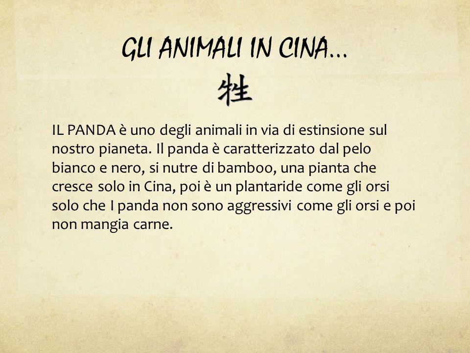GLI ANIMALI IN CINA… IL PANDA è uno degli animali in via di estinsione sul nostro pianeta.
