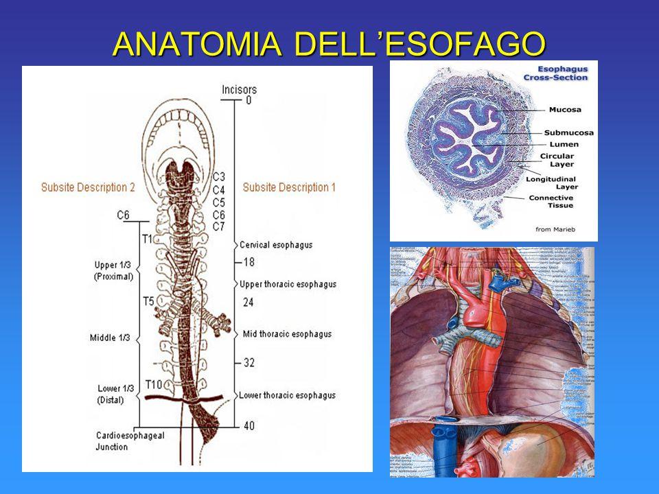 ANATOMIA DELL'ESOFAGO