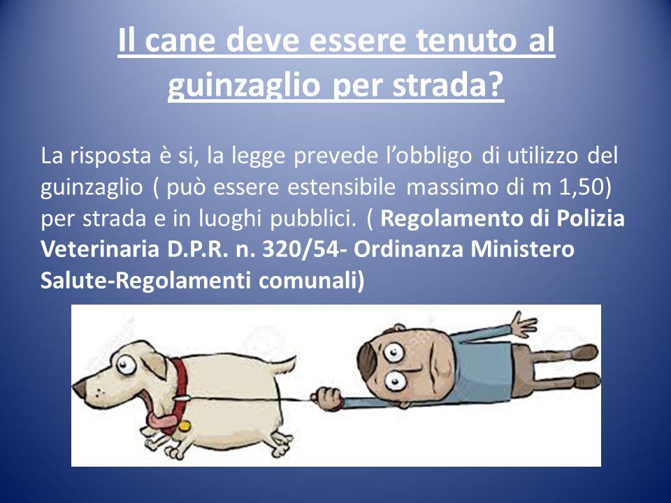 Il cane deve essere tenuto al guinzaglio per strada? La risposta è si, la legge prevede l'obbligo di utilizzo del guinzaglio ( può essere estensibile