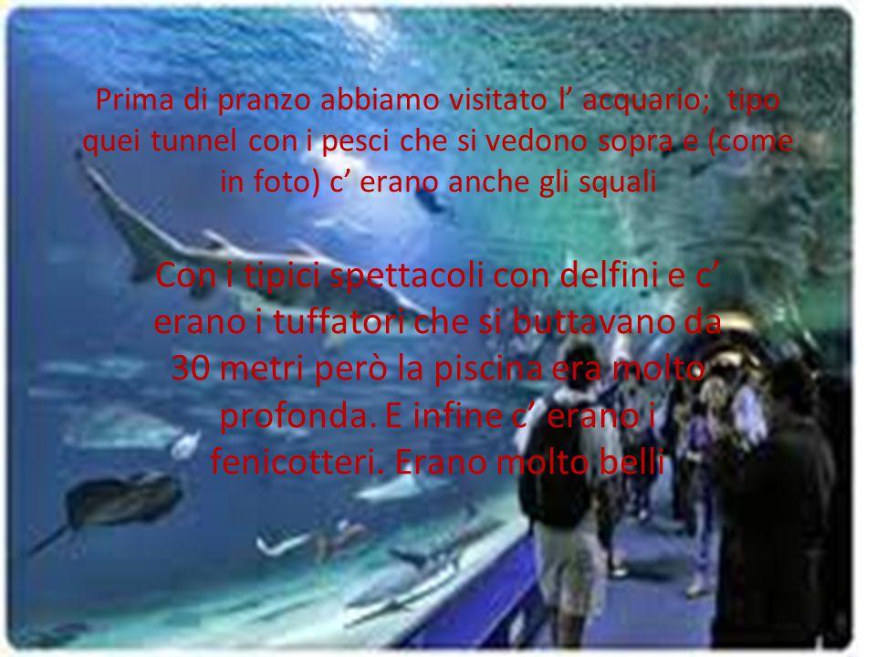 Prima di pranzo abbiamo visitato l' acquario; tipo quei tunnel con i pesci che si vedono sopra e (come in foto) c' erano anche gli squali Con i tipici