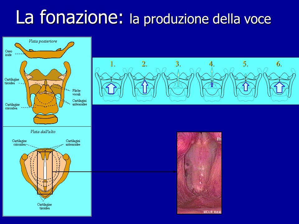 Fonetica e fonologia articolatoria Rappresentazione jakobsoniana (analisi per tratti dist.) Rappresentazione jakobsoniana (analisi per tratti dist.) Rappresentazione articolatoria Rappresentazione articolatoria