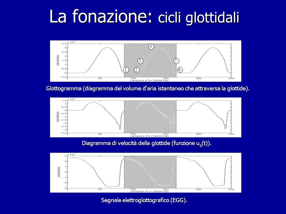 La fonazione: cicli glottidali 1.2.3. 4. 5. 6.