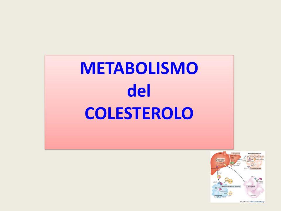 LA BIOSINTESI RICHIEDE Acetil CoA mitocondriale - piruvato (da glucosio) -  -ossidazione acidi grassi esportato dal mitocondrio sotto forma di citrato citrato + ATP + CoASH + citrato liasi --> ossalacetato + acetil CoA + ADP + Pi ossalacetato + NADH  malato + NAD + malato + NADP + + H 2 O + enzima malico  piruvato + HCO 3 - + NADPH + H + NADPH + H + - via dei pentosi fosfati (glucosio) - enzima malico ATP fosforilazione ossidativa IMPORTANZA DEL GLUCOSIO NELLA SINTESI DEL COLESTEROLO