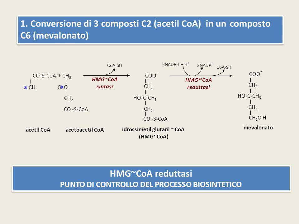 1. Conversione di 3 composti C2 (acetil CoA) in un composto C6 (mevalonato) HMG~CoA reduttasi PUNTO DI CONTROLLO DEL PROCESSO BIOSINTETICO HMG~CoA red
