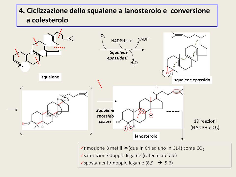 4. Ciclizzazione dello squalene a lanosterolo e conversione a colesterolo rimozione 3 metili  (due in C4 ed uno in C14) come CO 2 saturazione doppio