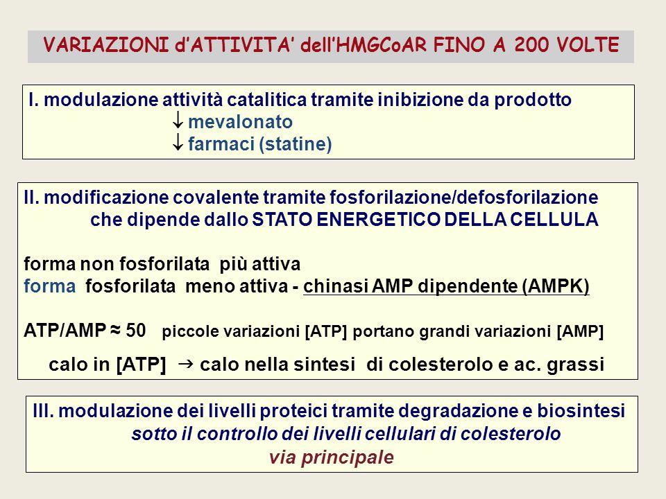 I. modulazione attività catalitica tramite inibizione da prodotto  mevalonato  farmaci (statine) II. modificazione covalente tramite fosforilazione/