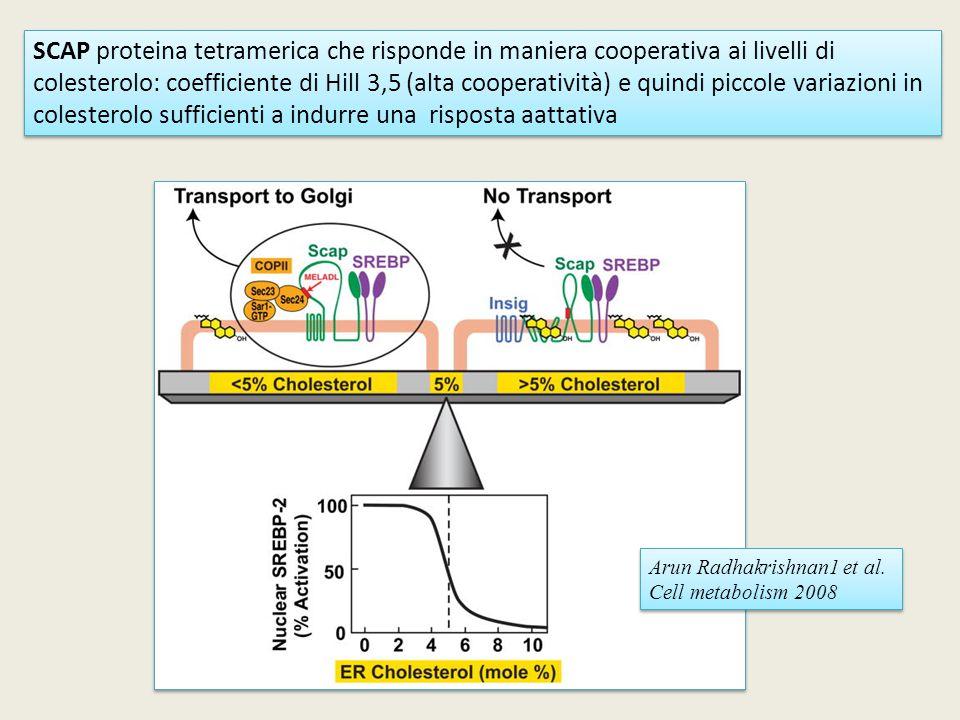 SCAP proteina tetramerica che risponde in maniera cooperativa ai livelli di colesterolo: coefficiente di Hill 3,5 (alta cooperatività) e quindi piccol