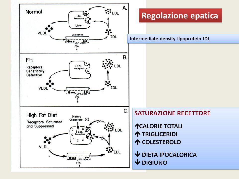 Regolazione epatica Intermediate-density lipoprotein IDL SATURAZIONE RECETTORE  CALORIE TOTALI  TRIGLICERIDI  COLESTEROLO  DIETA IPOCALORICA  DIG