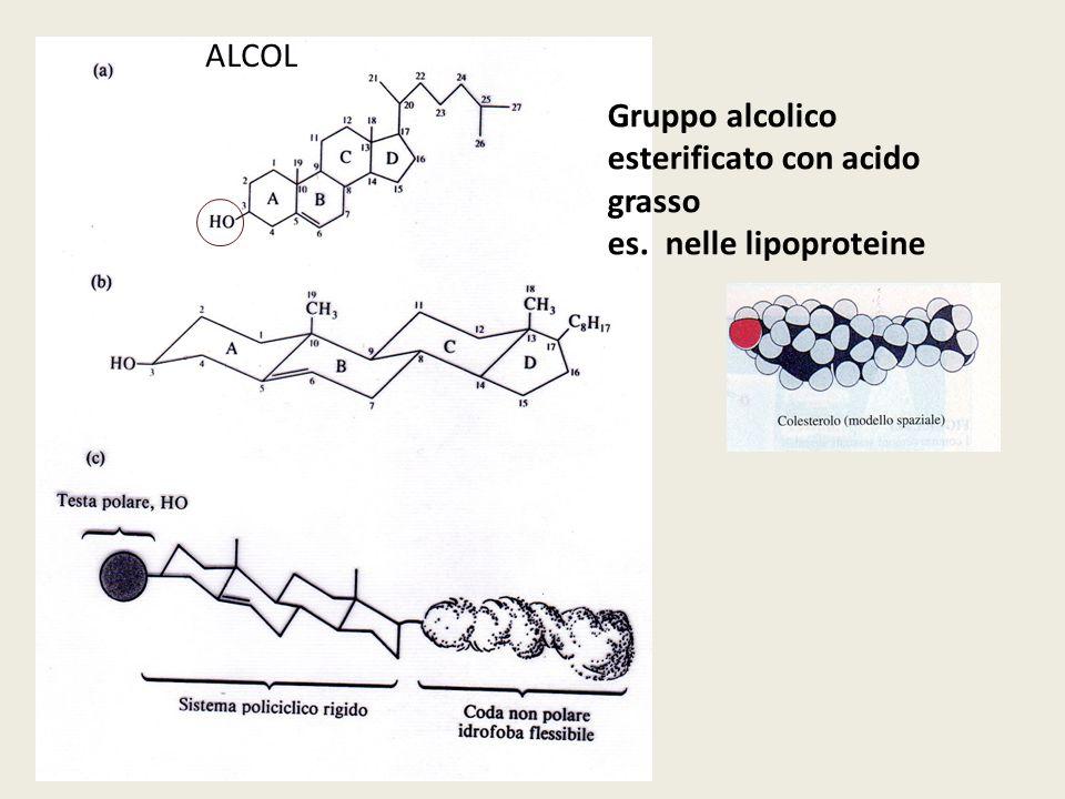 tramite i fattori di trascrizione Sterol Regulatory Element - Binding Protein SRE-BP Legano sequenze SRE Sterol Regulatory Element presenti nel promotore di geni coinvolti nella biosintesi di acidi grassi e colesterolo tramite i fattori di trascrizione Sterol Regulatory Element - Binding Protein SRE-BP Legano sequenze SRE Sterol Regulatory Element presenti nel promotore di geni coinvolti nella biosintesi di acidi grassi e colesterolo 2 isoforme sintetizzate da due distinti geni SRE-BP1c biosintesi di trigliceridi SRE-BP2 biosintesi di colesterolo e recettori LDL 2 isoforme sintetizzate da due distinti geni SRE-BP1c biosintesi di trigliceridi SRE-BP2 biosintesi di colesterolo e recettori LDL BIOSINTESI: regolazione trascrizionale