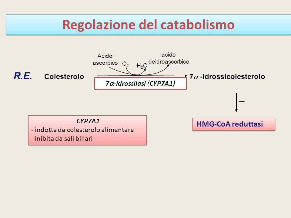 Regolazione del catabolismo CYP7A1 - indotta da colesterolo alimentare - inibita da sali biliari CYP7A1 - indotta da colesterolo alimentare - inibita