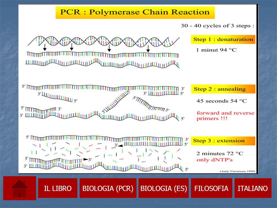 Un possibile risultato dell'elettroforesi IL LIBROBIOLOGIA (PCR)BIOLOGIA (ES)FILOSOFIAITALIANO