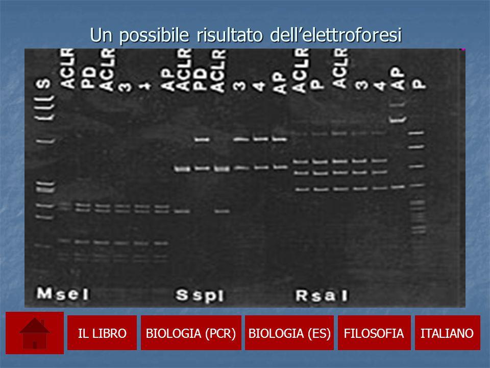 EMBRYO SPLITTING  Come si svolge e i possibili sviluppi  La clonazione e le sue motivazioni  La tecnica del trasferimento nucleare trasferimento nuclearetrasferimento nucleare  Se accade in natura: i gemelli IL LIBROBIOLOGIA (PCR)BIOLOGIA (ES)FILOSOFIAITALIANO