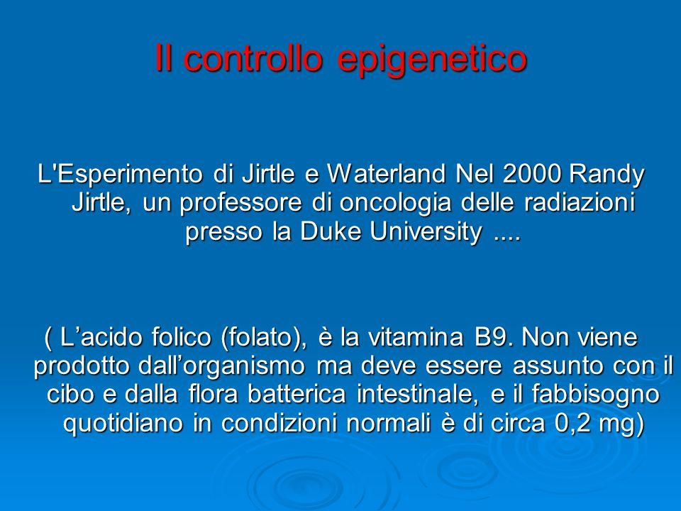 Il controllo epigenetico L'Esperimento di Jirtle e Waterland Nel 2000 Randy Jirtle, un professore di oncologia delle radiazioni presso la Duke Univers
