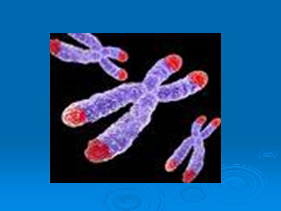 LA PNEI PSICO NEURO ENDOCRINO IMMUNOLOGIA La scienza che studia la organica di sostanze neuro- chimiche in risposta a emozioni e stati di coscienza ed il meccanismo con cui queste sostanze influenzano il sistema immunitario, la salute, la durata della vita