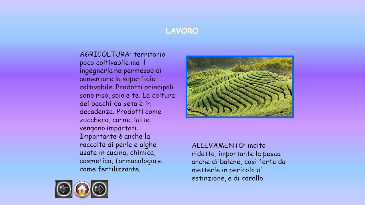 LAVORO AGRICOLTURA: territorio poco coltivabile ma l' ingegneria ha permesso di aumentare la superficie coltivabile. Prodotti principali sono riso, so