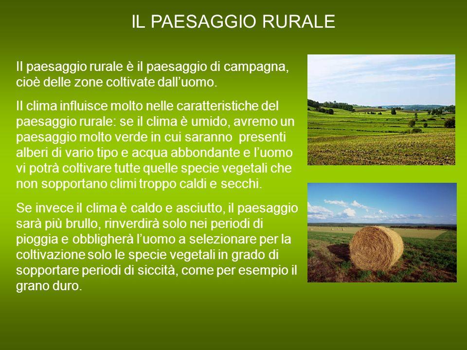 IL PAESAGGIO RURALE Il paesaggio rurale è il paesaggio di campagna, cioè delle zone coltivate dall'uomo. Il clima influisce molto nelle caratteristich