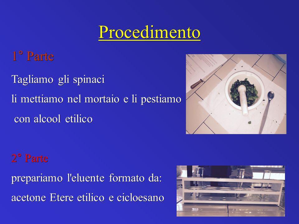 Procedimento 1° Parte Tagliamo gli spinaci li mettiamo nel mortaio e li pestiamo con alcool etilico con alcool etilico 2° Parte prepariamo l eluente formato da: acetone Etere etilico e cicloesano